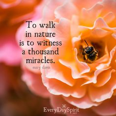 Witness the miracles! xo Get the app of gorgeous and uplifting wallpapers at ~ www.everydayspirit.net xo #nature #miracles #walk