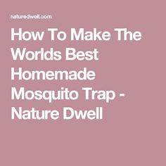 How To Make The Worlds Best Homemade Mosquito Trap - Nature Dwell