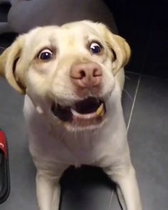 Funny and viral pet videos from the Gram.