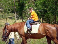 Μην διστάσετε να κάνετε μια βόλτα με άλογο σε μια μίνι περιήγηση γύρω από λίμνη Κερκίνη ή στο όρος Κρούσια κατά τη διαμονή σας στο Ξενοδοχείο Αγνάντιο 😀   #agnantiohotel #Greece #nature #serres #kerkini #thingstodo #visitgreece Horse Photography, Show Horses, Horseshoes, Macedonia, Animals, Instagram, Green Houses, Animales, Animaux