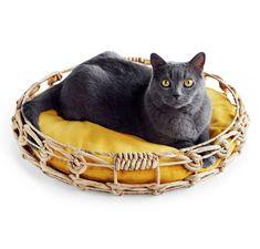 Cat Bedcountryliving