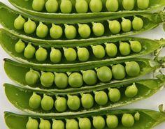 Садоводство: Выращивание гороха — урожай больше в 4 раза