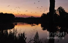#RIVER #SUNSET #Photography Quality Prints and Cards available at:  http://kaye-menner.artistwebsites.com/featured/river-sunset-kaye-menner.html  -