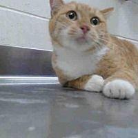 Pin By Hannelore Borgens On Cuteness Pet Adoption Cat Adoption Pets