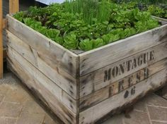 Apple crate garden how to make 66 Ideas Wooden Crates Garden, Old Wooden Crates, Diy Storage Crate, Milk Crates, Fruit Crates, Crate Decor, Dog Crate Furniture, Apple Crates, Garden Cakes