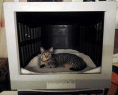 Repurposed Television Pet Bed