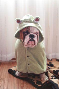 I love dressing up frog dog costume