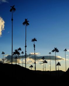 Camina por el Valle del Cocora, palmas y realismo mágico everywhere San Gil, Paraiso Natural, Andes Mountains, Tropical Forest, 16th Century, Old Town, South America, Colonial, Caribbean