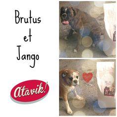 Brutus et Jango