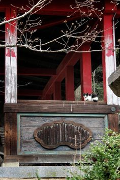 The grounds of Okuno-in at Ishite-ji are home to several cats, as well as chickens