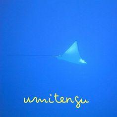 【umitengu_diving】さんのInstagramをピンしています。 《マダラトビエイ 最近、水納島でちょこちょこ見かけます!悠々と泳ぐ姿はホント空を飛んでるみたい😊 今日の朝一は水納島で潜れましたが、台風の風が強く吹いてきました。明日は瀬底島かなぁ。  #うみてんぐダイビングサービス #水納島 #瀬底島  #名護 #diving #海 #FUNダイビング #本部 #体験ダイビング #シュノーケル #水中写真無料プレゼント #スタッフ貸し切り  言葉では伝えられない感動が、この海の中に・・・! うみてんぐでは、サンゴ礁の楽園・水納島やクレパス地形広がる瀬底島など、多彩な本部周辺の海をファンダイブ・体験ダイビング・スノーケルなどお客様に合わせて少人数制にてご案内いたします。 インストラクター歴10年以上のプロガイドが、初めての方も初心者の方もベテラン・カメラ派の方もお客様のご要望に合わせて海遊びをプロデュース。 海は気まぐれに、海況は常に変化します。…