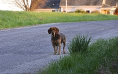 Country Dog - http://www.1pic4u.com/blog/2014/09/26/country-dog/