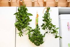 Yrtit talteen talveksi - Ruoka - Turun Sanomat. Kuva: Tara Jaakkola, TS Parsley, Pesto, Herbs, Plants, Food, Meal, Eten, Herb, Meals