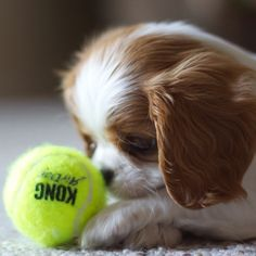 PHOTO OP: Fetched Via cavalier_queen.