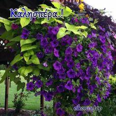 Καλησπέρα με Εικόνες Τοπ - eikones top Plants, Art, Art Background, Kunst, Plant, Performing Arts, Planets, Art Education Resources, Artworks