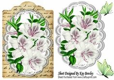 pretty white Azaleas on lace   script with butterflies on Craftsuprint - View…