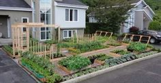 This is a beautiful front yard garden, interesting article on cities battling gardens .another front yard veggie garden.