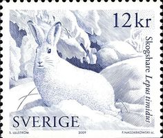 Rabbits on Stamps - Stamp Community Forum - Page 2 Stamp World, Postage Stamp Art, White Rabbits, Bunny Art, Vintage Stamps, Fauna, Mail Art, Stamp Collecting, Mammals