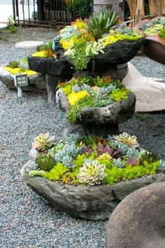 Rustic Landscape/Yard with 0.5 cu. ft. Pea Pebbles, Fence, Succulent Cuttings 40 Succulent Clippings, exterior stone floors
