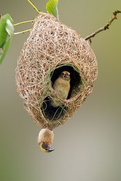 Nest by TED LEE on 500px