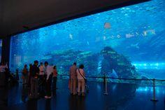 "Kuroshio Sea ""World's 2nd Largest Indoor Aquarium"" from the Okinawa Churaumi Aquarium in Okinawa, Japan"