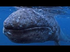 THERE IS NO PLANET B - YouTube Whale, Planets, Places To Visit, Amazing, Youtube, Animals, Whales, Animales, Animaux