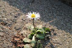 Frühlingsbeginn - Fotos