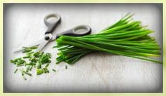 Chives Seeds,(Allium Schoenoprasum) onion,easy-to-grow from herb seeds, and their lavender flowers make an attractive clump or edging in gardens. Garlic Chives, Fresh Chives, Allium Schoenoprasum, Vegetable Soup Recipes, Herb Seeds, Kraut, Spice Things Up, Spices, Herbs