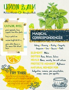 'Lemon Balm Grimoire Page' Metal Print by tysmiha - Millions of unique designs by independent artists. Find your thing. Magic Herbs, Herbal Magic, Plant Magic, Healing Herbs, Medicinal Herbs, Witch Herbs, Herbal Witch, Green Witchcraft, Witchcraft Herbs