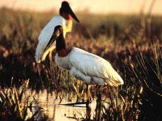 El Rincón del Socorro se encuentra en la reserva natural de Esteros del Iberá.