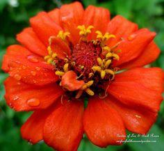 Garden Walk ~ Early Fall Garden :: Hometalk