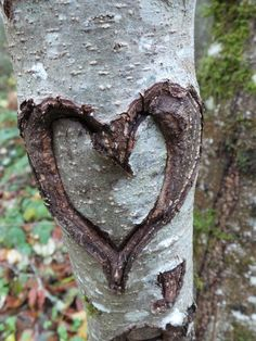 God's love all around everywhere in nature - He's even carved it in a tree...