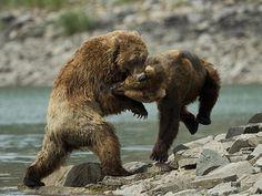 Alaska. | by richard.mcmanus.