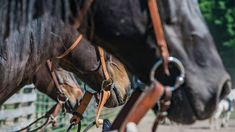 Cowgirls, from trainers to pleasure riders, should know as much as they can about the equipment they use on their horses. Equestrian, Anna, Photo And Video, Life, Instagram, Horseback Riding, Show Jumping, Equestrian Problems