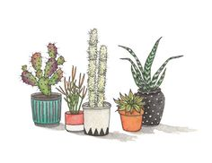 """Cacti Collection I . giclee art print of original watercolor illustration . 11"""" x 8.5"""""""