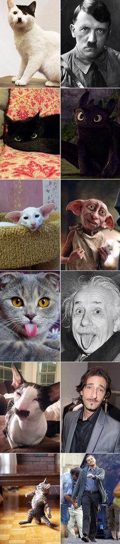 Cats that look like famous people (hahaha hitler pic 1)