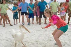 Cozi Zuehlsdorff vs. Rufus the pelican in Dolphin Tale 2.