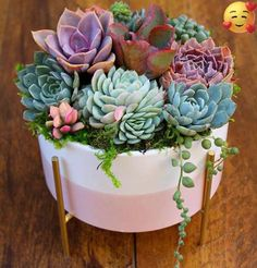 Unusual Succulents and Beautiful Gardens! Colorful Succulents, Succulents In Containers, Cacti And Succulents, Container Plants, Planting Succulents, Planting Flowers, Succulent Bowls, Succulent Gardening, Succulent Arrangements
