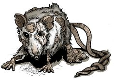 mutant rat - Google Search