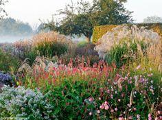 Jardin Plume jardin panicules rose argente