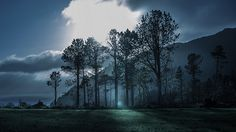 Woods by PineBarrens, via Flickr