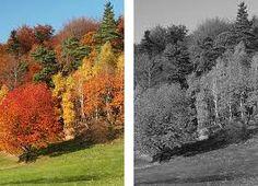 How To Make Color Photos Black & White