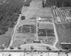 Los Feliz Boulevard in Atwater Village circa the Theodore Payne Nursery is seen, as well as part of Tam O'Shanter Restaurant (lower middle) Mind Blowing Pictures, California History, Southern California, Atwater Village, Echo Park, Silver Lake, Yesterday And Today, Back In The Day, Countryside
