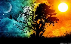 Tree at Night Widescreen Background Wallpapers