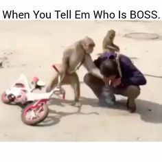 Check out all the awesome jajaja gifs on WiffleGif. Including all the funny gifs, lol gifs, and gracioso gifs. Funny Animal Pictures, Cute Funny Animals, Funny Cute, Best Funny Pictures, Hilarious, Monkey Pictures, Humor Grafico, Grand Theft Auto, Animal Memes
