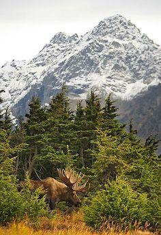 Chugach State Park, Alaska, USA