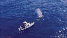 Drones are now helping to locate and monitor humpback whales entangled with fishing gear and ocean debris, according to an announcement from Oceans Unmanned Inc., a nonprofit organization that facilitates the use of unmanned technologies to protect the ocean and coastal marine environment.
