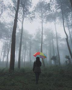 Tag all the nature lovers out there ! .  Lokasi/location: Camp Pinus, Gunung Sumbing, Jawa Tengah Credits to: @izwan_zavana  Please keep the place clean when you visit :) .  #IT_JawaTengah  ADD OFFICIAL LINE: @INDOTRAVELLERS ingat pakai @ yaa :D  Ayo gunakan hashtag #INDOTRAVELLERS siapa tau foto kamu yang akan kami repost berikutnya
