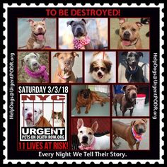 TO BE DESTROYED 03/03/18 - - Info     https://newhope.shelterbuddy.com/Animal/List   To rescue a Death Row Dog, Please read this:http://information.urgentpodr.org/adoption-info-and-list-of-rescues/ List of NH Rescues: http://www.nycacc.org/get-involved/new-hope/nhpartners To view the full album, please click ...-  Click for info & Current Status: http://nycdogs.urgentpodr.org/to-be-destroyed-4915/
