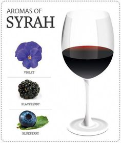 Aromas do sirah Wine Tasting Near Me, Wine Tasting Experience, Wine Facts, Wine Coolers Drinks, Wine Varietals, Chateauneuf Du Pape, Sangria Wine, Wine Education, Spanish Wine